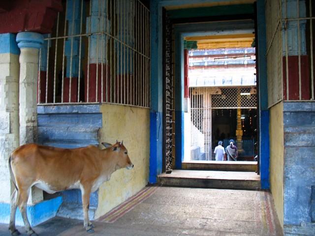 Чидамбарам. В храме Натараджа. У входа в святилище Шивакамасундари (Парвати)