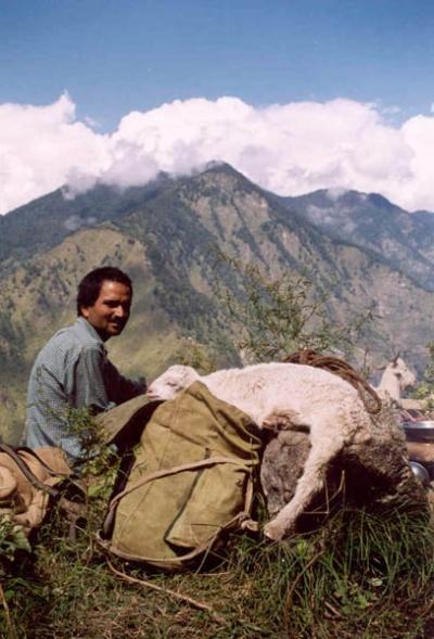 Расслабон в Гималаях