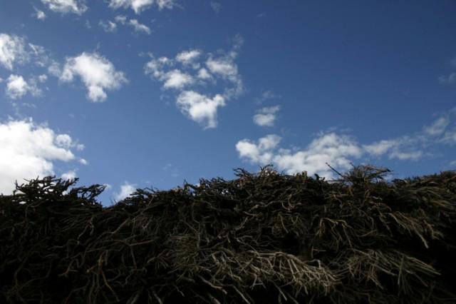 Крыши домов в долине Спити покрывают сухими ветками