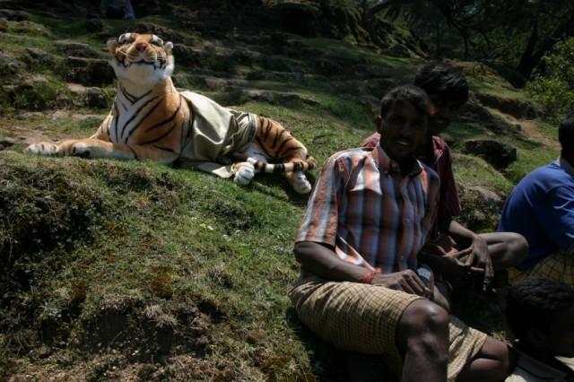 Фото на память...с тигром