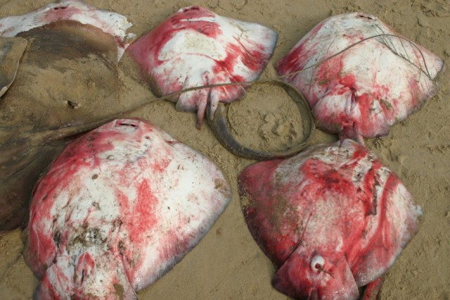 Мертвые тела рыб