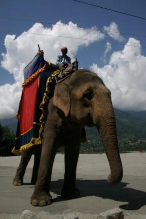 Слон в Гималаях