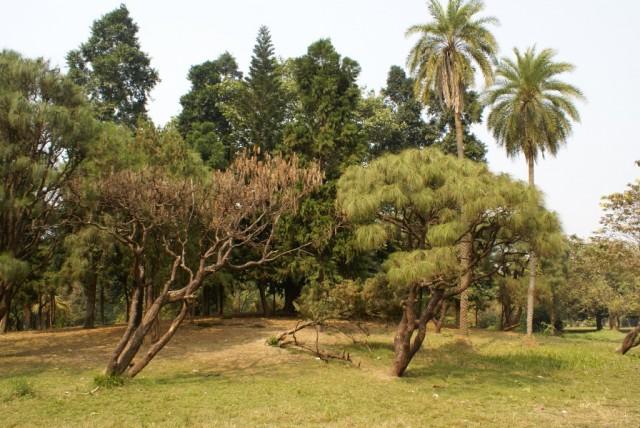Ботанический сад (Колката)2
