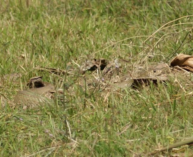 змеи свободно передвигаются по саду