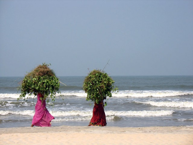 «Ходячие кусты» на пляже Мужапилангад