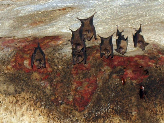 летучие мыши в пещерах Нитьянанда ашрама