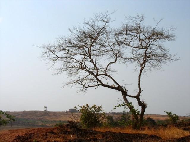 красная земля Кералы