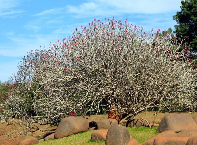 Дерево в саду Ауровилля