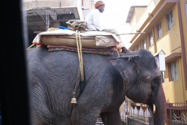 Слон, идущий по дороге в Мангалоре