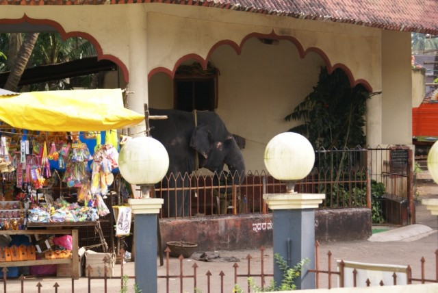 Удупи, храмовый слон