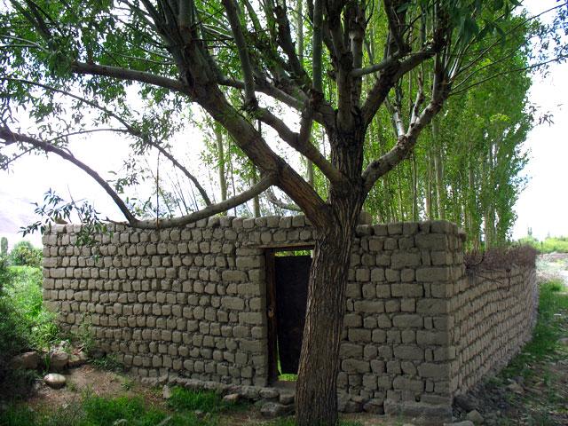 Дом для деревьев. Люди здесь уже не живут, зато поселились деревья. Даже замок на двери имеется