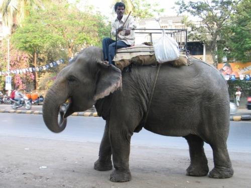 По улеце слона водили