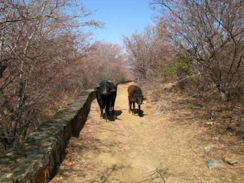 Дорога из Нахаргарха в Амбер