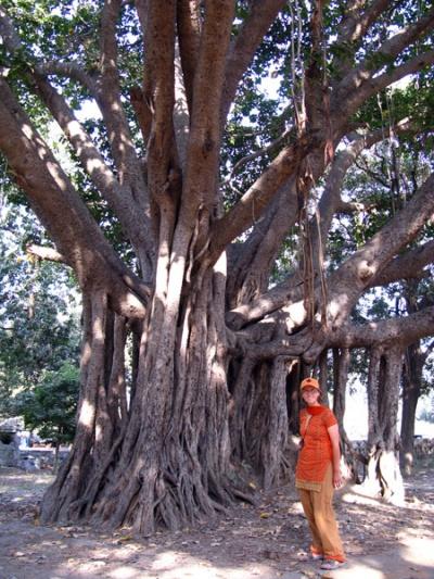 Чудо-дерево баньян