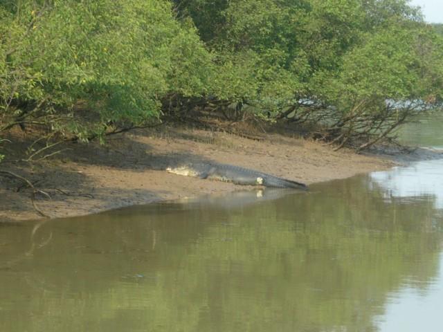 Крокодил в Битарканике