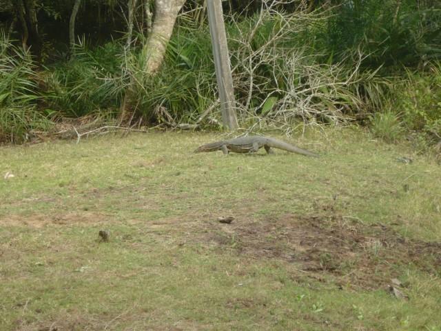 Некий дракон в парке Битарканики
