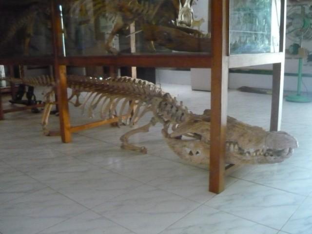 Скелеты в музее парка