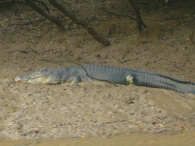 еще один крокодил в заповеднике