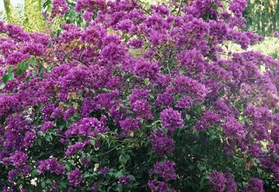 Цветы в ботаническом саду Удайпура