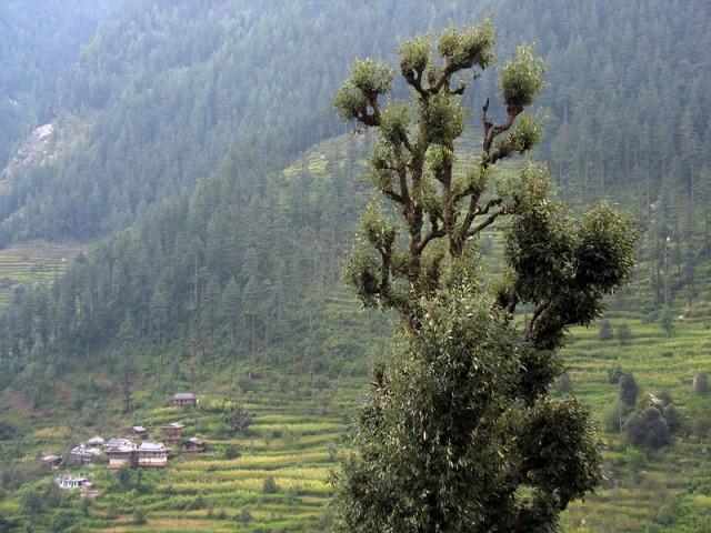 Пейзаж в долине Банджар