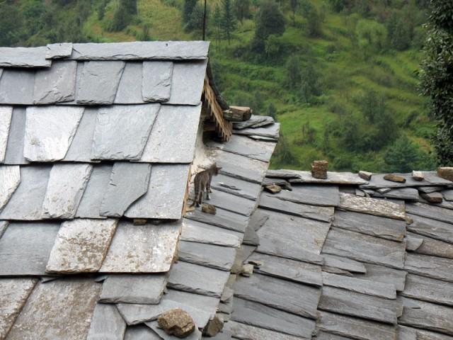 Тише, мыши, кот на крыше – 2