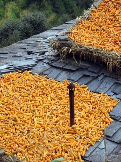 Так жители долины Банджар сушат кукурузу на крышах домов