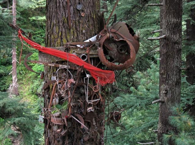 В долине Банджар некоторые деревья одеты в такие вот доспехи, видимо, из ритуальных соображений