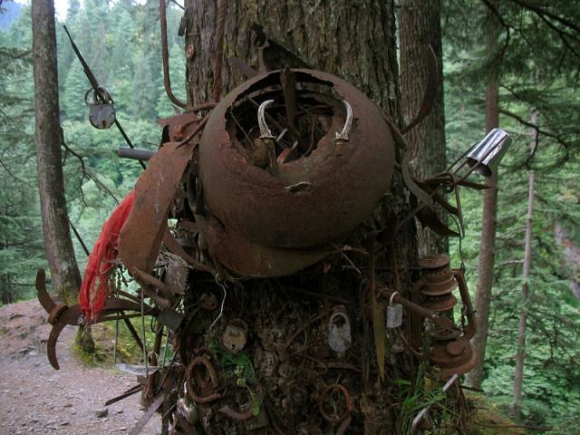 Деревья эти напоминают вооруженных рыцарей Средневековья