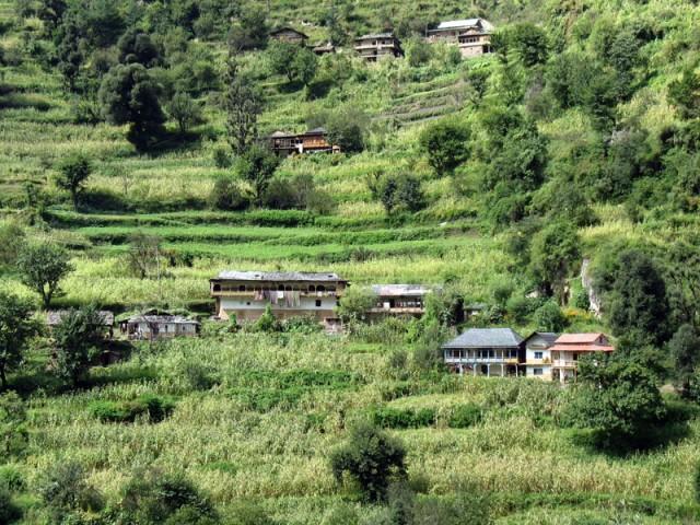 Дома в Джиби очень уютно располагаются среди террас и «клубящихся» деревьев