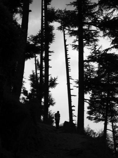 В лесу над деревней Джиби