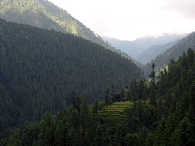 Гималайские леса