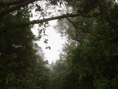 Гималайские деревца