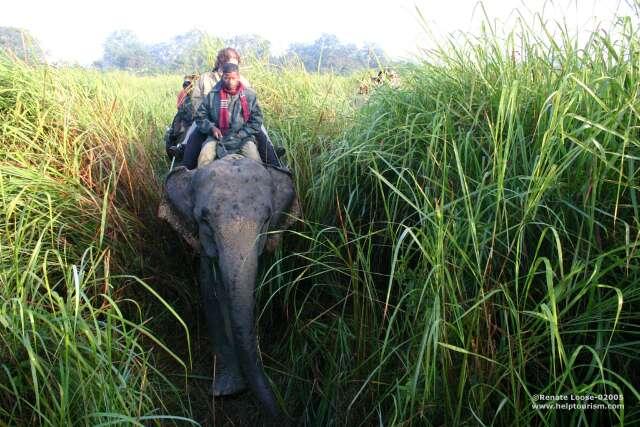 Сафари на слонах в Казиранге