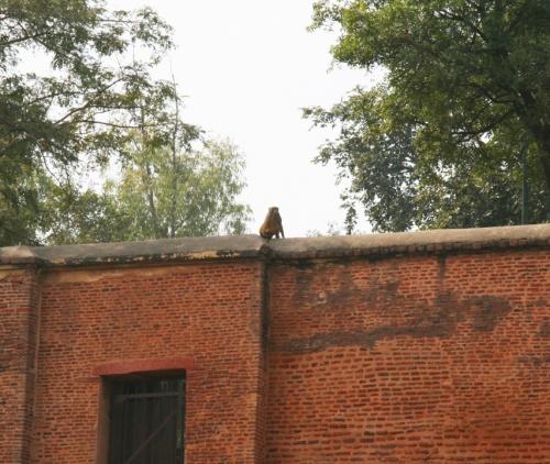 За забором-действующая армия Индии. Видимо в самоволку ушёл :))