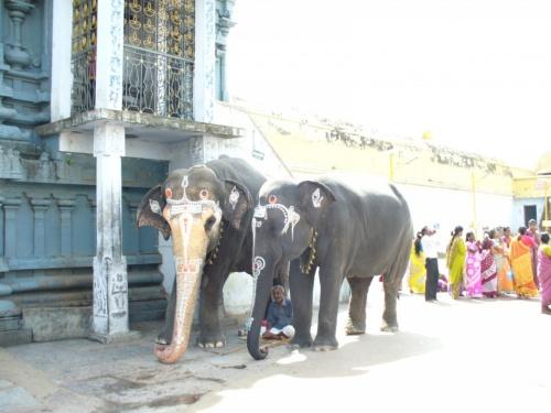 Канчипурам.слоники.