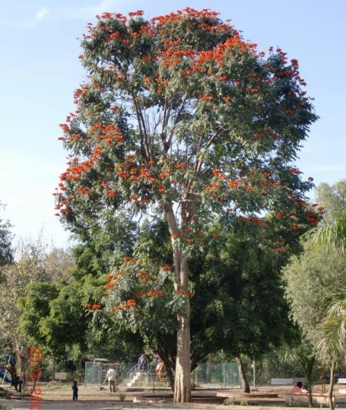 Аурангабад, парк.