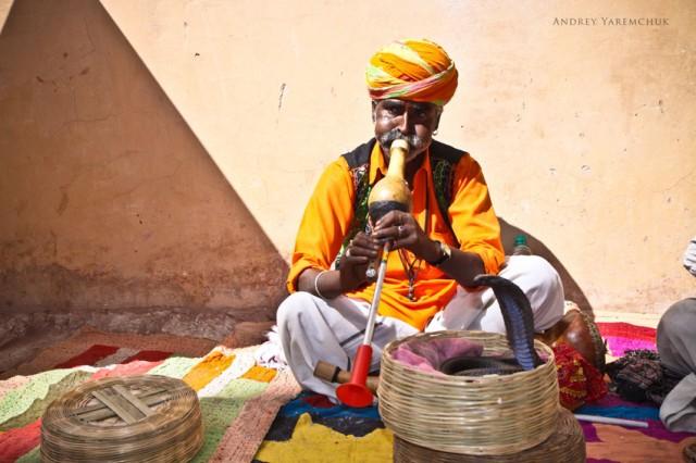 cobra, Jaipur