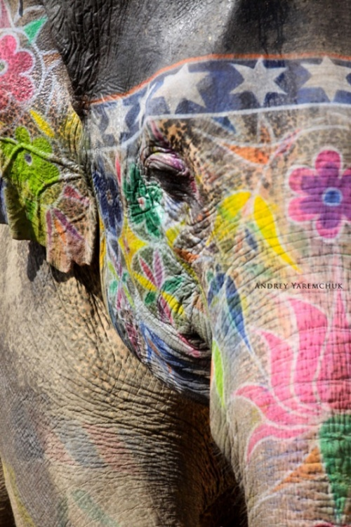 color elephant, Jaipur