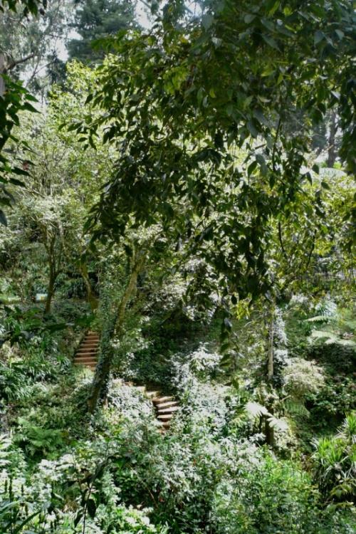 Ути - Ботанический сад
