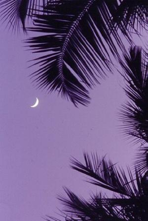 Вечер на Андаманских островах