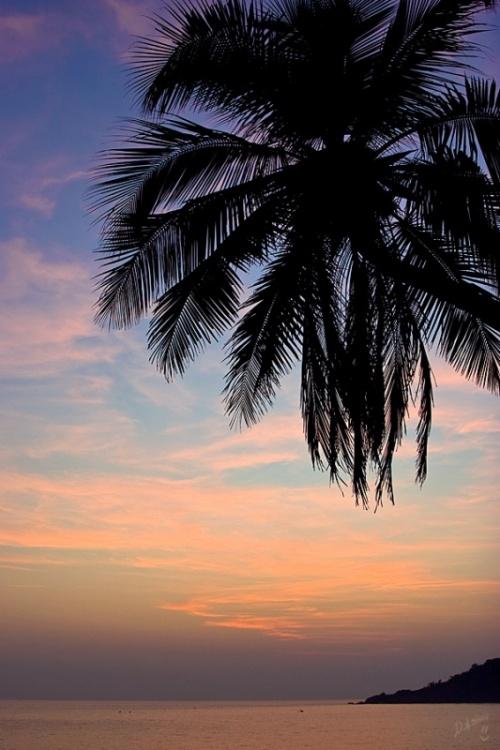 наша пальма