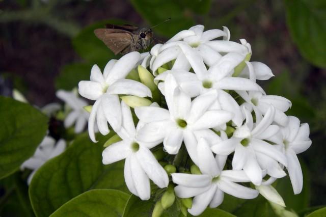 Цветы в парке Патана