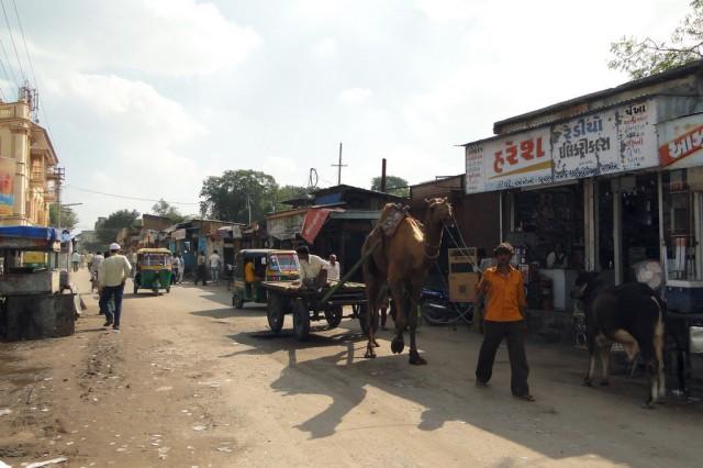 В северном Гуджарате верблюд - обычный вид транспорта