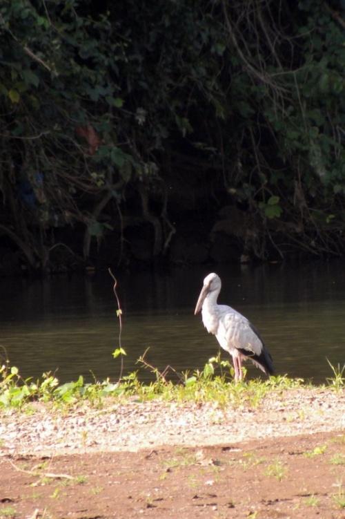 Птицы на прогулке вдоль реки