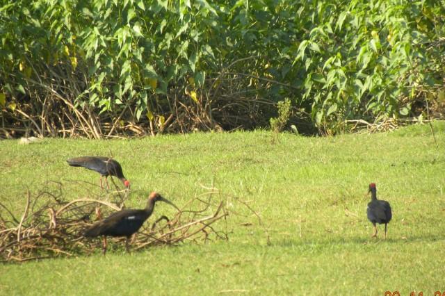 Птицы у реки Хиран