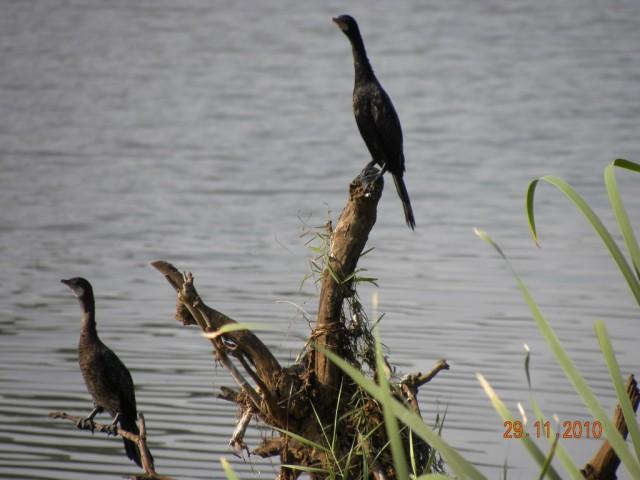 Еще птички