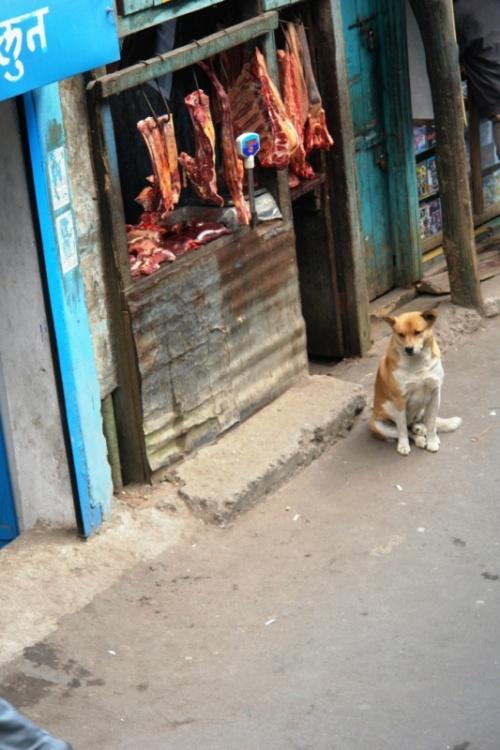 Собака с мясом