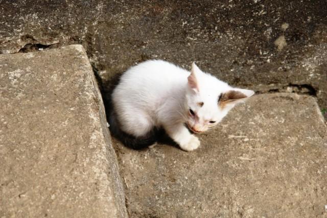 Местная кошка