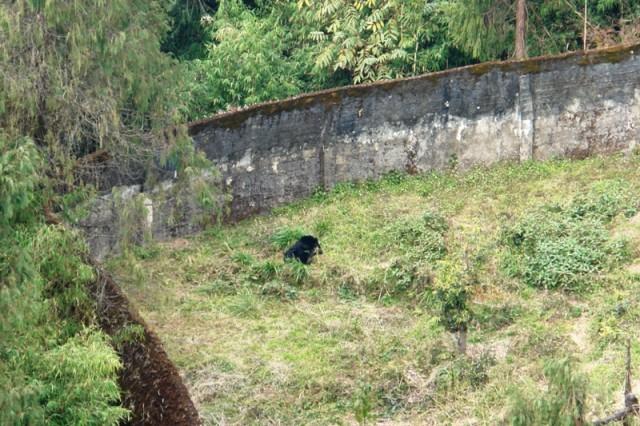 Это черное пятнышко - медведь