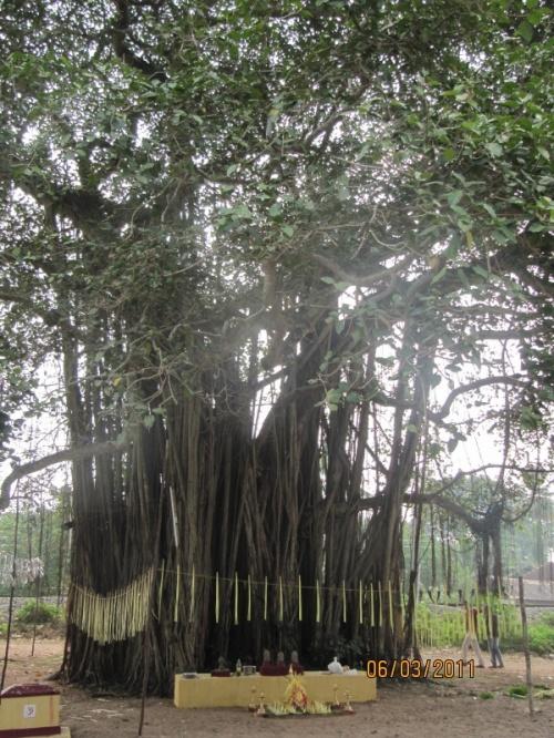дерево у храма